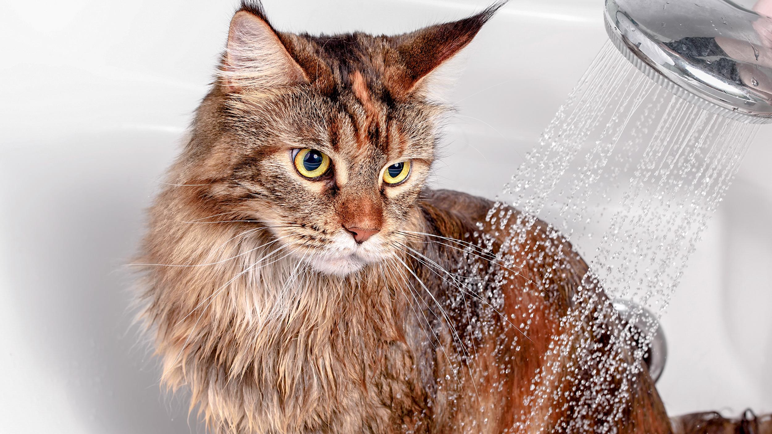 Cat hygiene cat